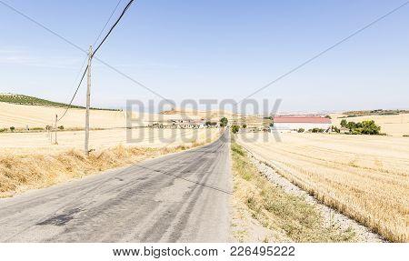 Summer Landscape With An Asphalt Road Through The Plains, Villar De Torre, Province Of La Rioja, Spa