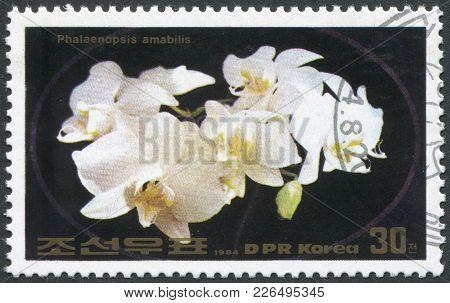 North Korea - Circa 1984: A Stamp Printed In North Korea Shows An Orchid Phalaenopsis Amabilis, Circ