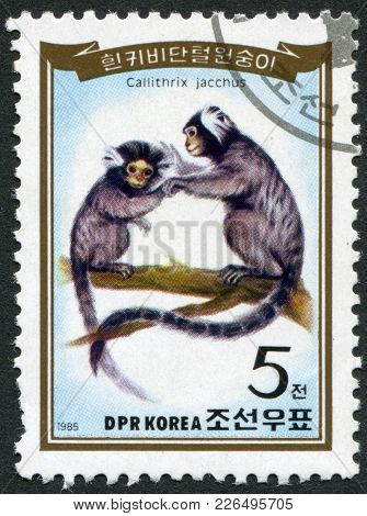 North Korea - Circa 1985: A Stamp Printed In North Korea, Shows The Common Marmoset (callithrix Jacc
