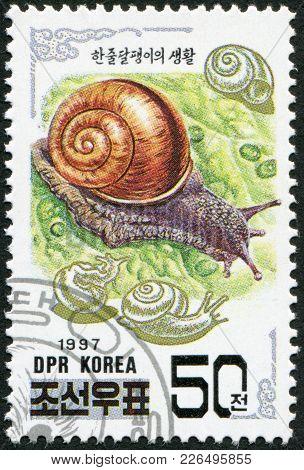 North Korea - Circa 1997: A Stamp Printed In North Korea Shows Asian Snail (fruticicola Lubuana), Ci