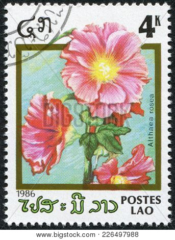 Laos-circa 1986: A Stamp Printed In The Laos, Depicts A Flower Althaea Rosea, Circa 1986