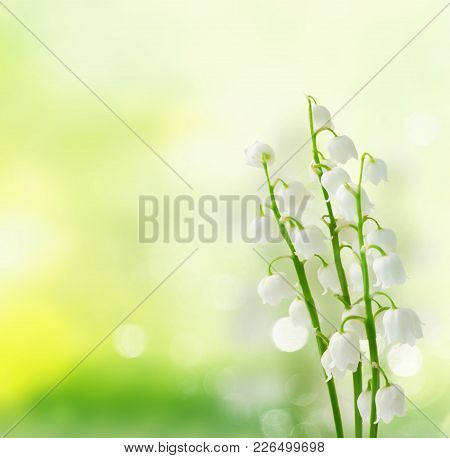 Lilly Of The Valley Flowers On Green Bokeh Background