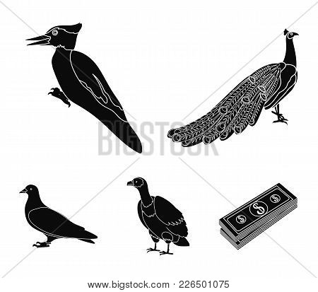 Peacock, Woodpecker And Various Species. Birds Set Collection Icons In Black Style Vector Symbol Sto