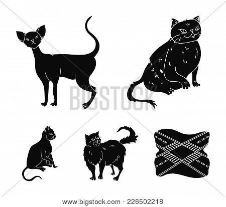 Persian, Cornish Rex And Other Species. Cat Breeds Set Collection Icons In Black Style Vector Symbol