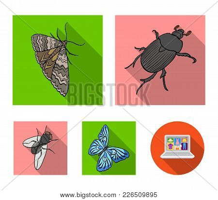 Arthropods Insect Beetle, Moth, Butterfly, Fly. Insects Set Collection Icons In Flat Style Vector Sy