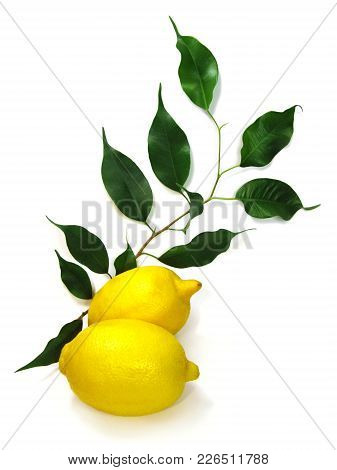 Photo Of Yellow Lemon Citrus Fruit With Green Leaves Isolated On White Background