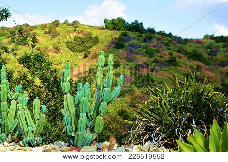 Drought Tolerant Landscaping Including Cacti At A Residential Rock Garden Overlooking The Whittier H