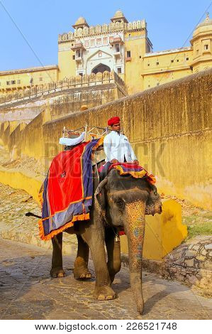 Amber, India - November 13: Unidentified Man Rides Decorated Elephant From Amber Fort On November 13