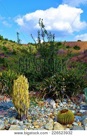 Drought Tolerant Landscaping Including A Cacti Rock Garden And Hills Beyond Covered With Chaparral S