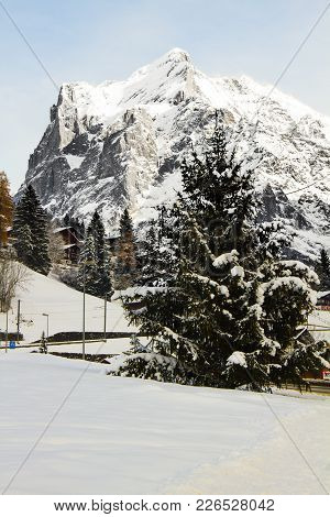 Christmassy Landscape With Pine Trees In Front Of Mountain, All Covered By Snow On A Sunny Day.