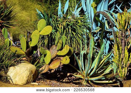 Drought Tolerant Landscaping With Cacti Plants Taken In A Residential Garden