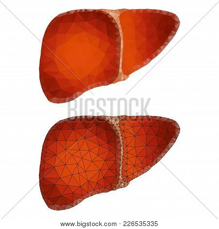 Healthy Human Polygonal Liver Internal Organ Triangle Low Poly Design. Connected Dots Polygon Techno