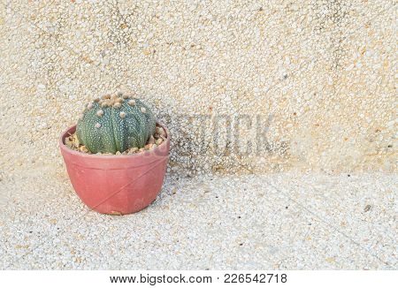 Closeup The Cactus In Brown Pot On Blurred Stone Floor And Wall Texture Background