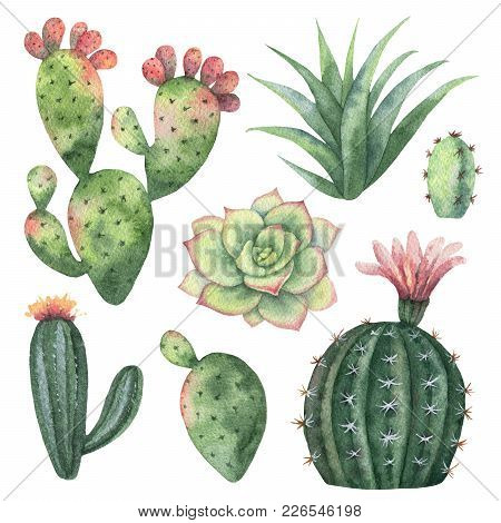 Watercolor Set Of Cacti And Succulent Plants Isolated On White Background. Flower Illustration For Y