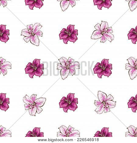 Seamless Pattern With Pink Lilies Flower On White Background. Vector Set Of Blooming Floral For Wedd