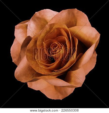 Rose Orange Flower  On The Black Isolated Background With Clipping Path.  No Shadows. Closeup.  Natu