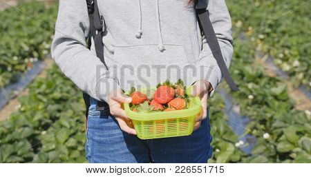 Woman holding strawberry on basket in the field