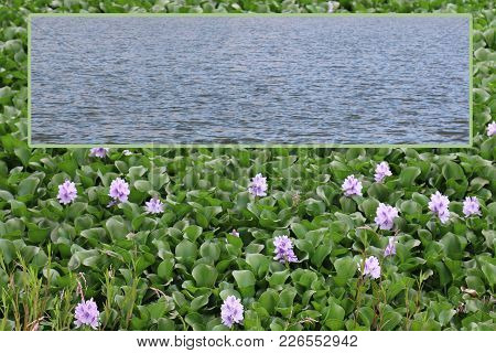Water Plants Nursery With Bordered Open Text Box Area Template