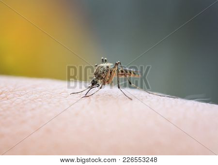 Closeup Of A Nasty Insect Mosquito Sitting On Her Hand And Drinks The Blood Of The Pierced Skin