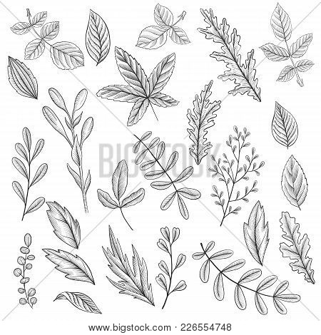 Vintage Vector Floral Set Of Isolated Elements In Victorian Style, Leaves Ofplants And Trees, Imitat