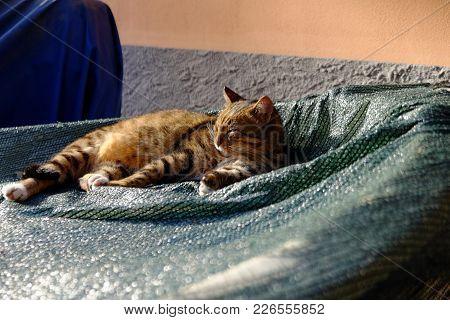Nap Time Cat Under The Italian Sun