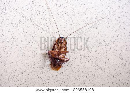 Death Cockroach On The Floor, Pest Control Concept