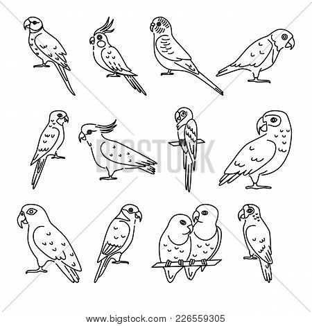 Collection Of Parrot Icons In Thin Line Style. Tropical Bird Symbols Isolated On White Background.