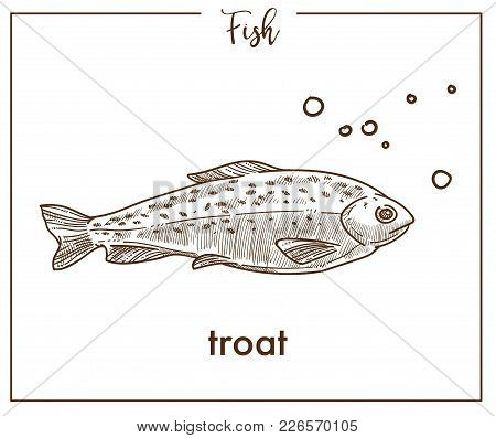 Trout Sketch Fish Icon. Vector Isolated Salmon Seatrout Or Char Species Fish Sketch For Fishing, Sea