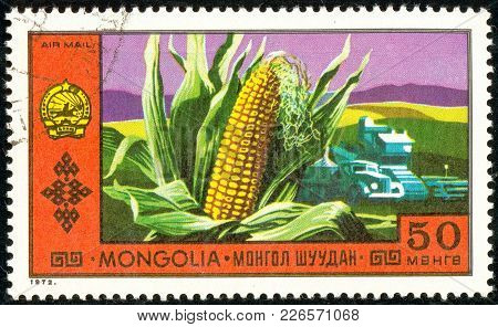 Ukraine - Circa 2018: A Postage Stamp Printed In Mongolia Show Corn On The Background Of The Field A