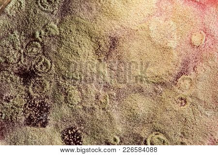 Development Of Mold On Organic Basis, Abstract Background
