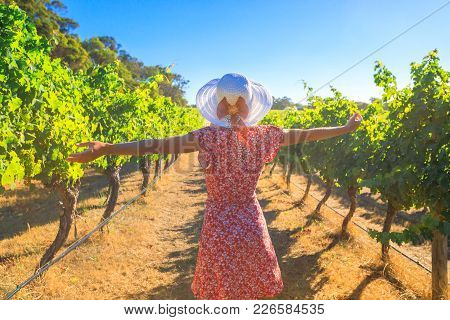 Australian Vineyard. Carefree Blonde Woman With Open Arms Among The Rows Of Grapes, Enjoys The Harve