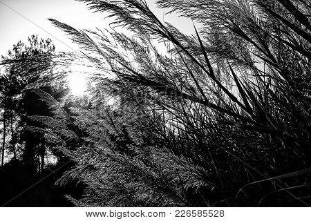 Sunset In The Forest, Grass And Trees