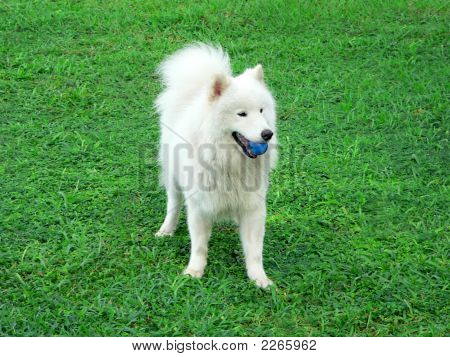 Dog Fetching Blue Ball
