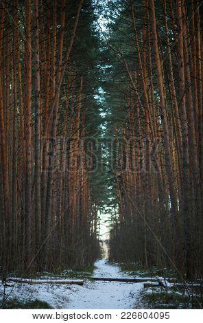 Photo of winter landscape, snowy road in woods
