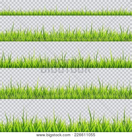 Grass Border Collection. Vector Illustration On Transparent Background. Horizontal Panorama.