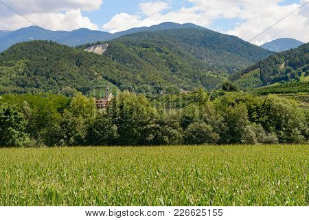 Landscape Of A Green Wheat Field On The Alps