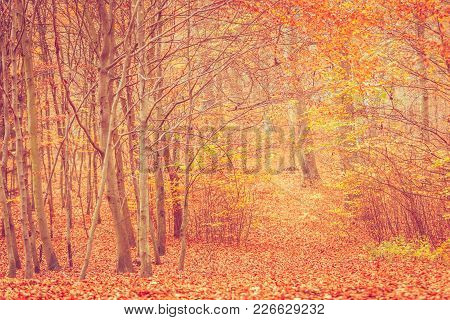 Nature Outdoor Scenery Woodland Concept. Autumnal Bushes In Forest. Small Vegetation Amidst Fall Fol