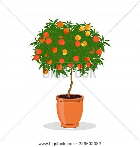 Peach Tree Growing In Pot. Dwarf Fruit Tree In The Terracotta Flower Pot. Growing Peaches In A Conta