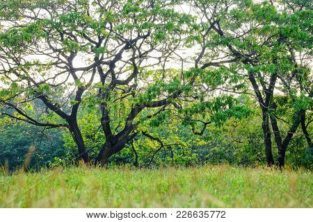 A Tropical Tree At The Park In The City With Green Grassland On A Hill And Warm Light In The Evening