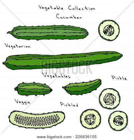 Cucumber Vector Illustration Set Long English Slicing, Pickling, Gherkin, Pickles, Burpless, Round S