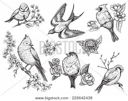 Bird Hand Drawn Set In Vintage Style With Flowers. Spring Birds Sitting On Blossom Branches. Linear