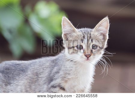 Portrait Of Kitten . In The Park In Nature
