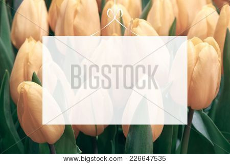 Translucent Blank Greeting Card On Selection Of Many Tulips Background