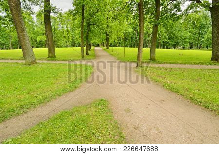 Sunny Landscape In The Forest.colorful Views Of Nature With Green Vegetation.