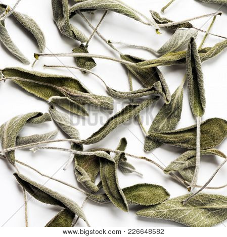 Dried Sage (salvia) Leaves On A White Background
