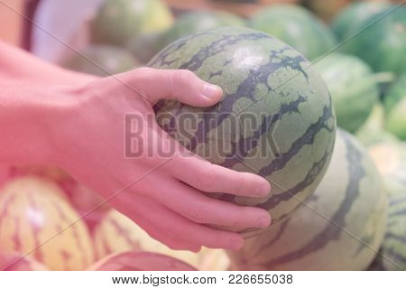 A Great Watermelon In The Hands Of The Buyer. The Buyer Chooses A Watermelon.