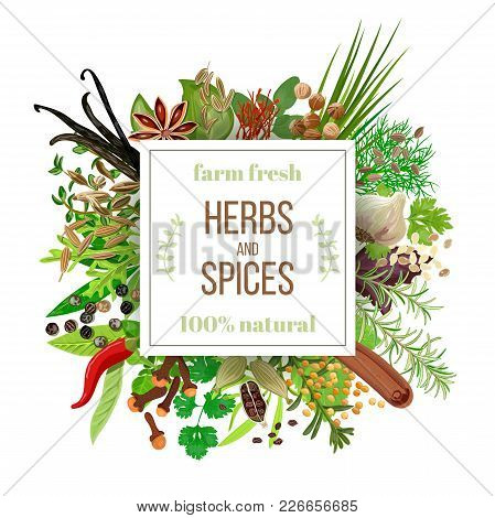Big Set Culinary Herbs And Spices Under Squire Emblem. Bunch Of Cooking Seasonings. For Cosmetics, C
