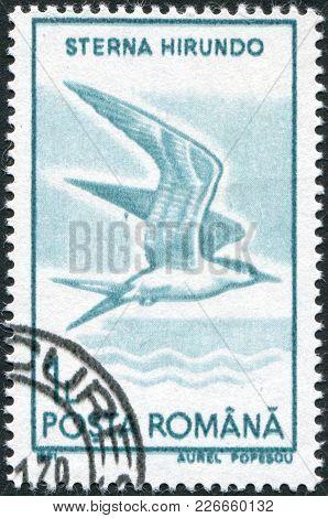 Romania - Circa 1991: A Stamp Printed In The Romania, Shows The Common Tern (sterna Hirundo), Circa