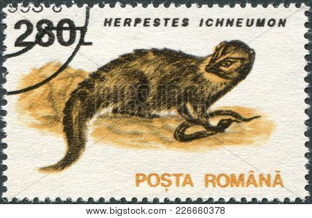 Romania - Circa 1993: A Stamp Printed In The Romania, Shows The Egyptian Mongoose (herpestes Ichneum