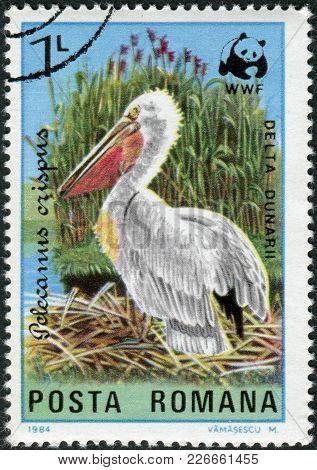 Romania - Circa 1984: A Stamp Printed In The Romania, Shows The Dalmatian Pelican (pelecanus Crispus